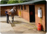 Hot Horse Shower Professional